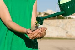 Child watering plant in cupped hand Royalty Free Stock Photo