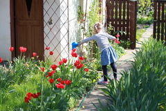 A child wet red tulips in the garden Royalty Free Stock Images