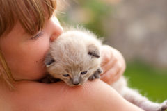 Child and a white kitten. Royalty Free Stock Photos
