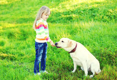 Child and white labrador retriever dog on grass in summer Stock Images