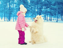 Child with white Samoyed dog playing on snow winter Royalty Free Stock Photography