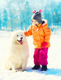 Child and white Samoyed dog playing winter gives paw Stock Photo