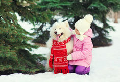 Child and white Samoyed dog in red scarf near christmas tree in winter Royalty Free Stock Images