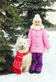 Child with white Samoyed dog in red scarf near christmas tree in winter Stock Image