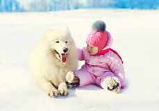 Child with white Samoyed dog sitting on snow in winter Stock Photos