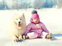 Child and white Samoyed dog sitting on snow in winter Stock Photography