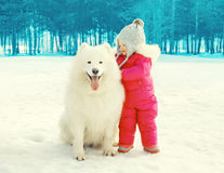 Child with white Samoyed dog on snow walking in winter Stock Photography