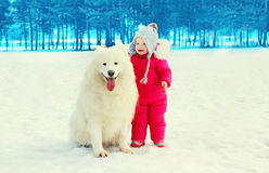 Child with white Samoyed dog on snow walking in winter Royalty Free Stock Images
