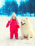 Child with white Samoyed dog on snow in winter Royalty Free Stock Photography