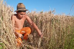 child who cuts the grain royalty free stock photo