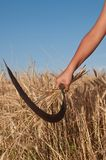 Child who cuts the grain. Child who cuts the wheat with scythe Royalty Free Stock Photos
