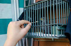 Child who eats bird in a cage Royalty Free Stock Images