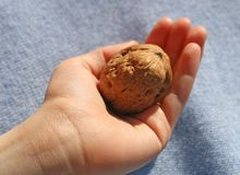 Child who is holding a  walnut Royalty Free Stock Photography