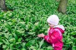 Child in wild garlic Royalty Free Stock Photo