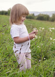 Child on wild meadow Stock Images