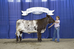 Child winner of Cow Competition Royalty Free Stock Image