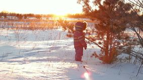 A child in winter walks through snowdrifts to a pine tree on a sunset background. Child development stock video