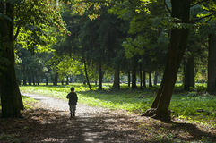 Child in the woods. Four year old boy walks along the forest road Royalty Free Stock Photography
