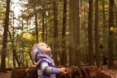 Child Woods Look Up Stock Photo