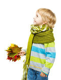 Child in woolen scarf holding maple leaves Royalty Free Stock Photography