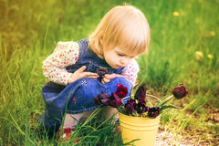 Child with yellow basket of purple tulip flowers in spring outdo Royalty Free Stock Photo