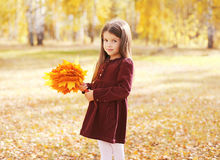 Child with yellow maple leafs in autumn Royalty Free Stock Photo