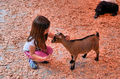 Child and young goat Royalty Free Stock Photography