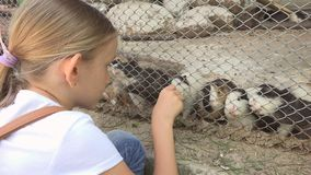 Child in Zoo Park, Girl Feeding Guinea Pigs, Kids Love Nursing Animals Pets Care stock photos