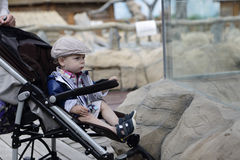 Child in zoo Stock Image
