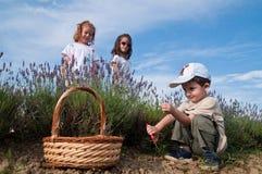Childer het plukken lavendel Royalty-vrije Stock Foto's
