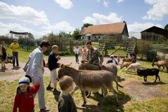 Childern jouant avec les animaux domestiques dans Kadzidlo Images stock