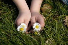 Childhands con las flores Imagen de archivo