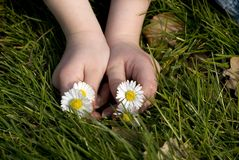 Childhands with flowers Stock Image