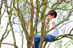 Childhood. Boy sits in a tree with curly branches Stock Photos
