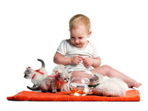 Childhood. Little child, little curiosity kittens and goldship in aquarium, on cotton towel, isolated on white Royalty Free Stock Photo