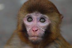 Childish little monkey Royalty Free Stock Photos