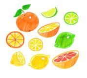 Childlike drawing of citrus fruit. Stock Photos