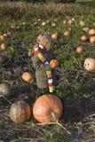 Childr on pumpkin field Stock Photos