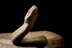Children��s python Stock Images