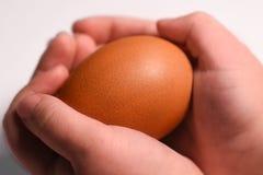 Children& x27; руки s держат яичко начало жизни стоковое изображение