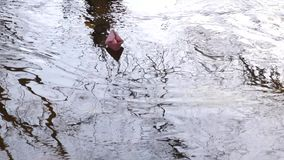 Children adolescents let a paper boat through the transparent stream of the river. Children adolescents let a paper boat through transparent stream of river stock video footage