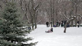 Children and adults on an inflatable sled and tube. Icy snowy hill. Tubing. Russia, city of Saratov, 10 Jan. 2017.  stock video footage