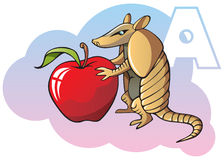 Children alphabet: letter A. Series of Children alphabet: letter A, armadillo and apple, cartoon vector illustration Stock Photography