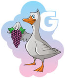 Children alphabet: letter G. Series of Children alphabet: letter G, goose and grapes, cartoon vector illustration Royalty Free Stock Images