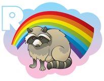 Children alphabet: letter R. Series of Children alphabet: letter R, raccoon and rainbow, cartoon vector illustration Royalty Free Stock Photo