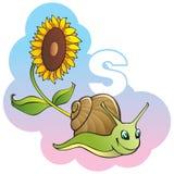 Children alphabet: letter S. Series of Children alphabet: letter S, snail and sunflower, cartoon vector illustration Stock Image