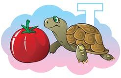 Children alphabet: letter T. Series of Children alphabet: letter T, turtle and tomato, cartoon vector illustration Royalty Free Stock Photo
