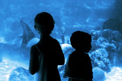 Children in the aquarium. They have fun Royalty Free Stock Images