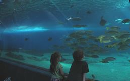 Children at the aquarium Royalty Free Stock Photos