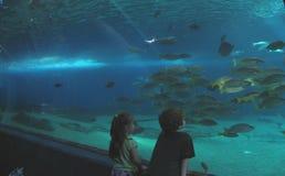 Children at the aquarium royalty free stock photos